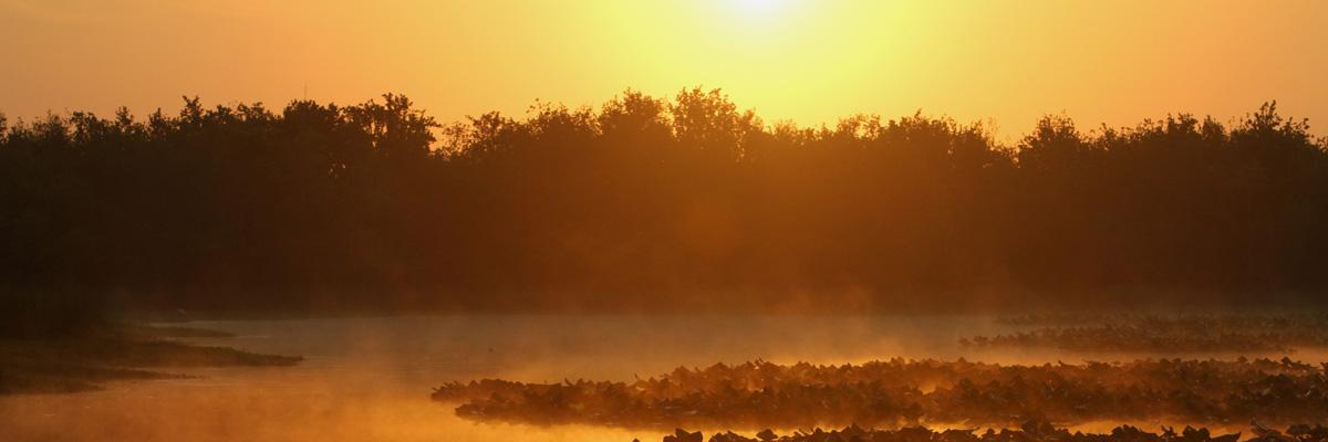 Foggy lake at sunrise