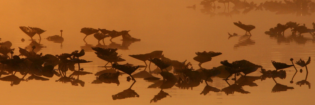 Birds on the water in the fog